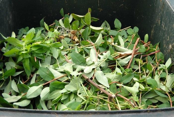 枝葉の廃棄物